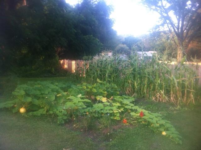 gardenpumpkins